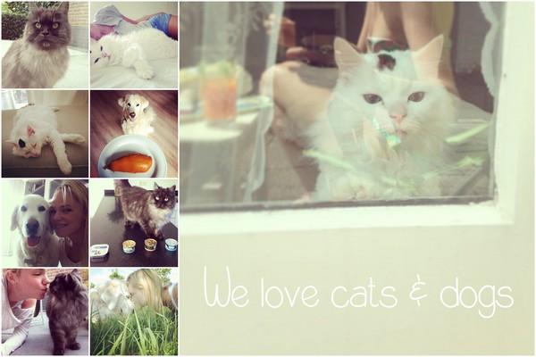 we love cats and dogs proud2Bme